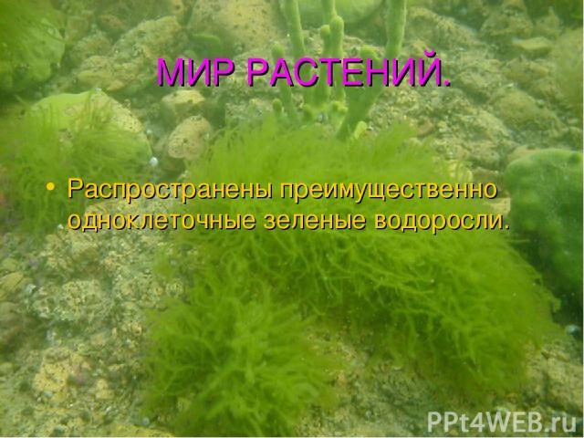 МИР РАСТЕНИЙ. Распространены преимущественно одноклеточные зеленые водоросли.