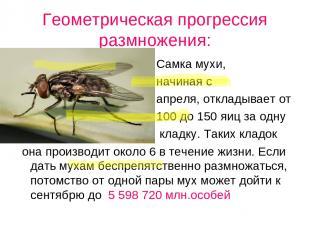 Геометрическая прогрессия размножения: Самка мухи, начиная с апреля, откладывает
