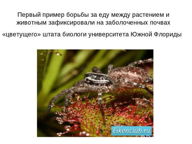 Первый пример борьбы за еду между растением и животным зафиксировали на заболоченных почвах «цветущего» штата биологи университета Южной Флориды