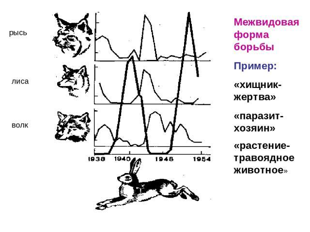 рысь лиса волк Межвидовая форма борьбы Пример: «хищник-жертва» «паразит-хозяин» «растение-травоядное животное»