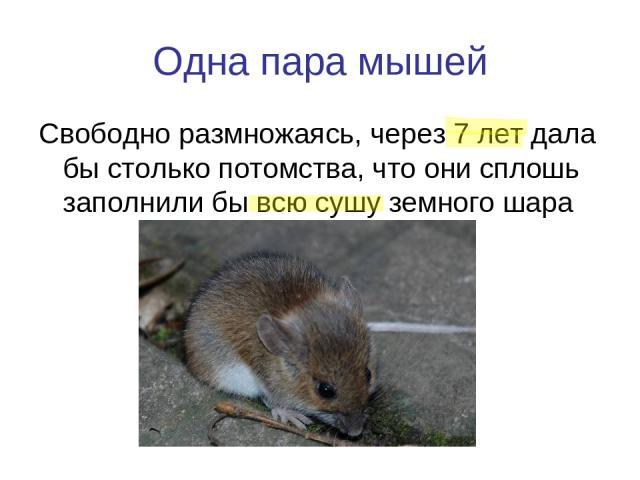 Одна пара мышей Свободно размножаясь, через 7 лет дала бы столько потомства, что они сплошь заполнили бы всю сушу земного шара