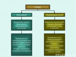 Отбор Массовый Индивидуальный Выделение группы организмов с необходимыми признак