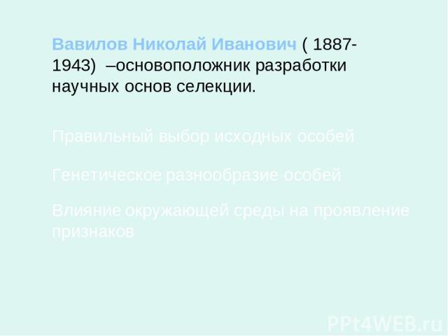 Вавилов Николай Иванович ( 1887- 1943) –основоположник разработки научных основ селекции. Правильный выбор исходных особей Генетическое разнообразие особей Влияние окружающей среды на проявление признаков