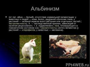Альбинизм (от лат. albus — белый), отсутствие нормальной пигментации: у животных