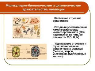 Молекулярно-биологические и цитологические доказательства эволюции Клеточное стр