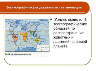 Биогеографические доказательства эволюции А. Уоллес выделил 6 зоогеографических