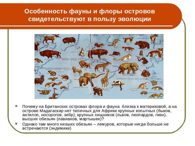 Особенность фауны и флоры островов свидетельствуют в пользу эволюции Почему на Британских островах флора и фауна близка к материковой, а на острове Мадагаскар нет типичных для Африки крупных копытных (быков, антилоп, носорогов, зебр), крупных хищник…