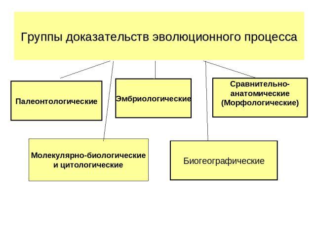 Палеонтологические Эмбриологические Сравнительно- анатомические (Морфологические) Биогеографические Группы доказательств эволюционного процесса Молекулярно-биологические и цитологические