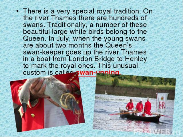 There is a very special royal tradition. On the river Thames there are hundreds of swans. Traditionally, a number of these beautiful large white birds belong to the Queen. In July, when the young swans are about two months the Queen's swan-keeper go…