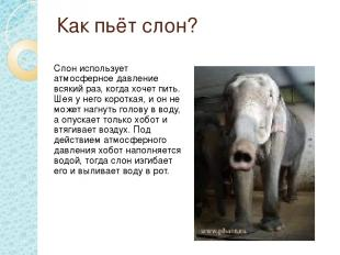 Как пьёт слон? Слон использует атмосферное давление всякий раз, когда хочет пить