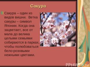 Сакура Сакура – один из видов вишни. Ветка сакуры – символ Японии. Когда она зац