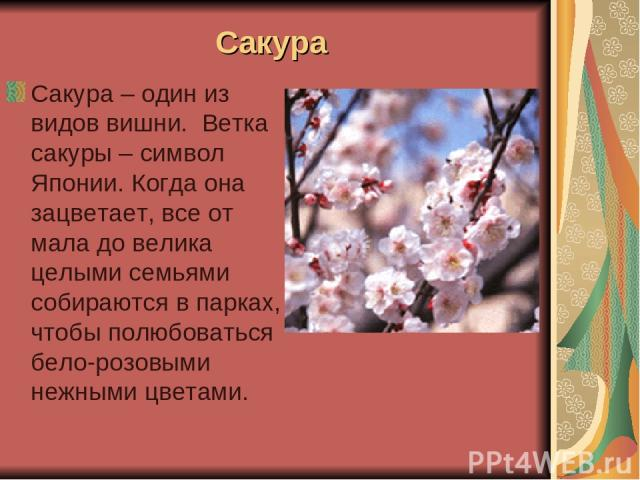 Сакура Сакура – один из видов вишни. Ветка сакуры – символ Японии. Когда она зацветает, все от мала до велика целыми семьями собираются в парках, чтобы полюбоваться бело-розовыми нежными цветами.