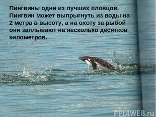 Пингвины одни из лучших пловцов. Пингвин может выпрыгнуть из воды на 2 метра в в