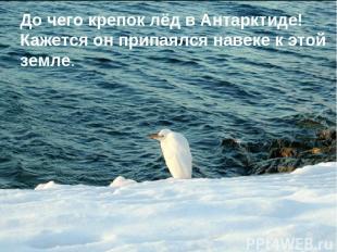 До чего крепок лёд в Антарктиде! Кажется он припаялся навеке к этой земле.