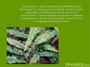 Папоротники - представители древнейшей флоры. Миллионы лет назад, когда по нашей