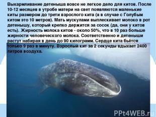 Выкармливание детеныша вовсе не легкое дело для китов. После 10-12 месяцев в утр
