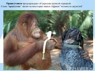 """Орангутанги предупреждают об агрессии громкой отрыжкой. Слово """"орангутанг"""" значи"""