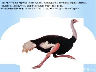 Из одного яйца страуса можно сделать одиннадцать с половиной порций омлетов. Нуж