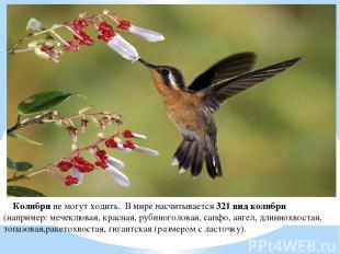 Колибри не могут ходить. В мире насчитывается 321 вид колибри (например: мечеклю