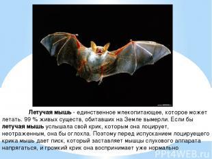Летучая мышь - единственное млекопитающее, которое может летать. 99 % живых суще