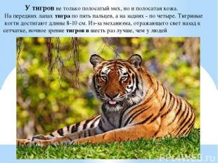 У тигров не только полосатый мех, но и полосатая кожа. На передних лапах тигра п