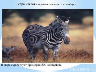Зебра - белая с черными полосами, а не наоборот. В мире существует примерно 500