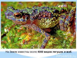 На Земле известны около 4000 видов лягушек и жаб.
