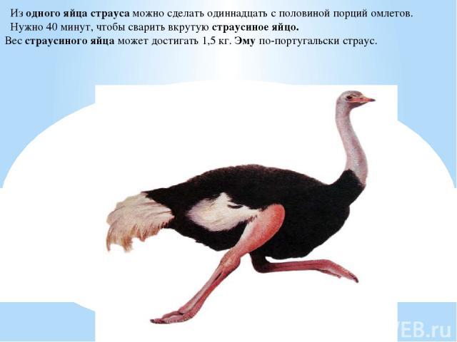 Из одного яйца страуса можно сделать одиннадцать с половиной порций омлетов. Нужно 40 минут, чтобы сварить вкрутую страусиное яйцо. Вес страусиного яйца может достигать 1,5 кг. Эму по-португальски страус.