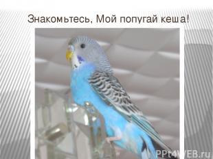 Знакомьтесь, Мой попугай кеша!