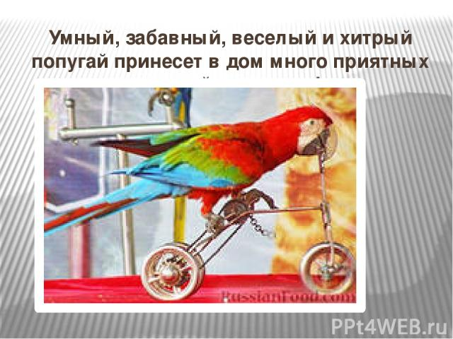 Умный, забавный, веселый и хитрый попугай принесет в дом много приятных эмоций и радости!