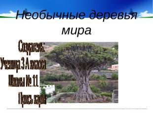 Необычные деревья мира