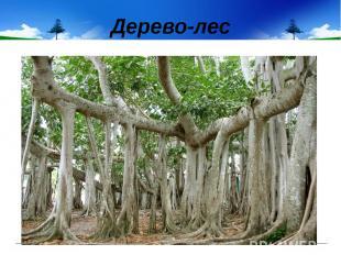 Дерево-лес