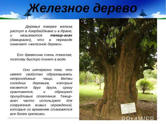 Железное дерево Деревья тверже железа растут в Азербайджане и в Иране, и называются темир-агач (дамирагач), что в переводе означает «железное дерево». Его древесина очень тяжелая, поэтому быстро тонет в воде. Оно интересно тем, что имеет свойство об…
