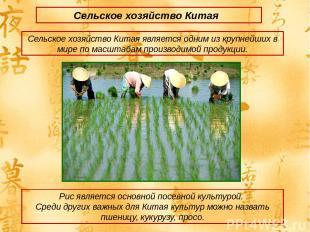 Сельское хозяйство Китая Сельское хозяйство Китая является одним из крупнейших в
