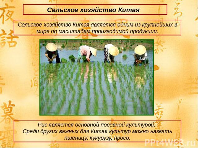 Сельское хозяйство Китая Сельское хозяйство Китая является одним из крупнейших в мире по масштабам производимой продукции. Рис является основной посевной культурой. Среди других важных для Китая культур можно назвать пшеницу, кукурузу, просо.
