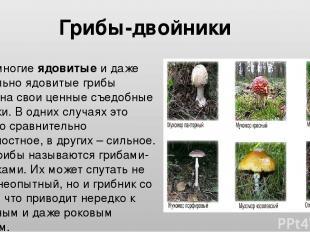 Очень многие ядовитые и даже смертельно ядовитые грибы похожи на свои ценные съе