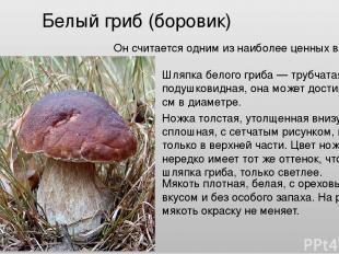 Белый гриб (боровик) Он считается одним из наиболее ценных видов грибов. Шляпка