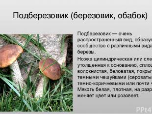 Подберезовик (березовик, обабок) Подберезовик — очень распространенный вид, обра
