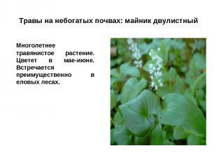 Травы на небогатых почвах: майник двулистный Многолетнее травянистое растение. Ц
