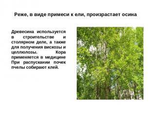 Реже, в виде примеси к ели, произрастает осина Древесина используется в строител