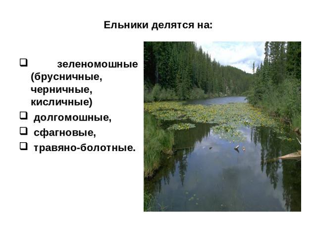 Ельники делятся на: зеленомошные (брусничные, черничные, кисличные) долгомошные, сфагновые, травяно-болотные.