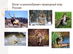 Богат и разнообразен природный мир России