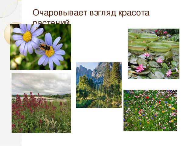 Очаровывает взгляд красота растений