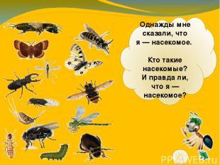Однажды мне сказали, что я— насекомое. Кто такие насекомые? Иправдали, что я