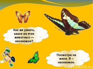 Какже узнать, какое изэтих животных— насекомое? Посмотри на меня. Я – насеком