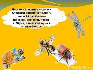 Многие насекомые – силачи. Стрекоза способна поднять вес в 10 раз больше собстве