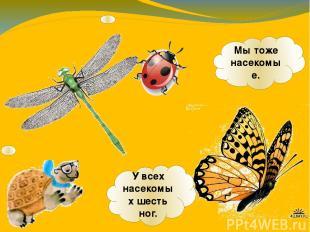 У всех насекомых шесть ног. Мы тоже насекомые.