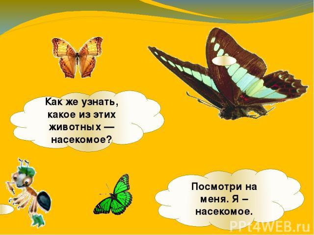 Какже узнать, какое изэтих животных— насекомое? Посмотри на меня. Я – насекомое.