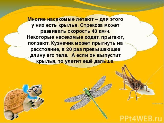 Многие насекомые летают – для этого у них есть крылья. Стрекоза может развивать скорость 40 км/ч. Некоторые насекомые ходят, прыгают, ползают. Кузнечик может прыгнуть на расстояние, в 20 раз превышающее длину его тела. А если он выпустит крылья, то …