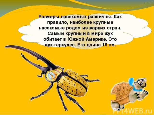 Размеры насекомых различны. Как правило, наиболее крупные насекомые родом из жарких стран. Самый крупный в мире жук обитает в Южной Америке. Это жук-геркулес. Его длина 16 см.